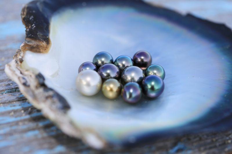 Mehrere Zuchtperlen in einer Austernschale